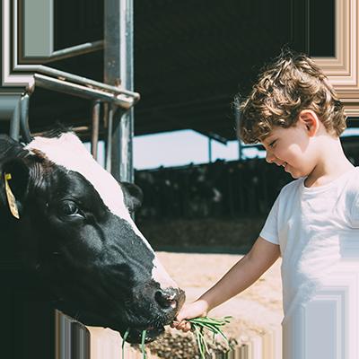 St. Anna Advies - Landbouw