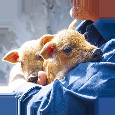 St. Anna Advies - Landbouwdieren